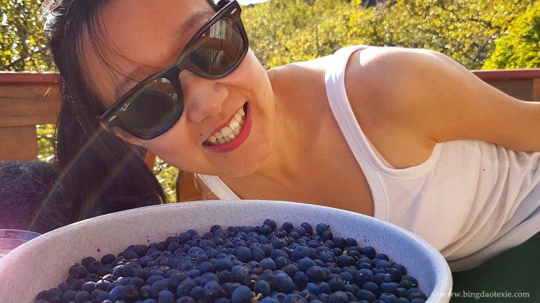 蓝莓派对 —— 抓住夏天的尾巴