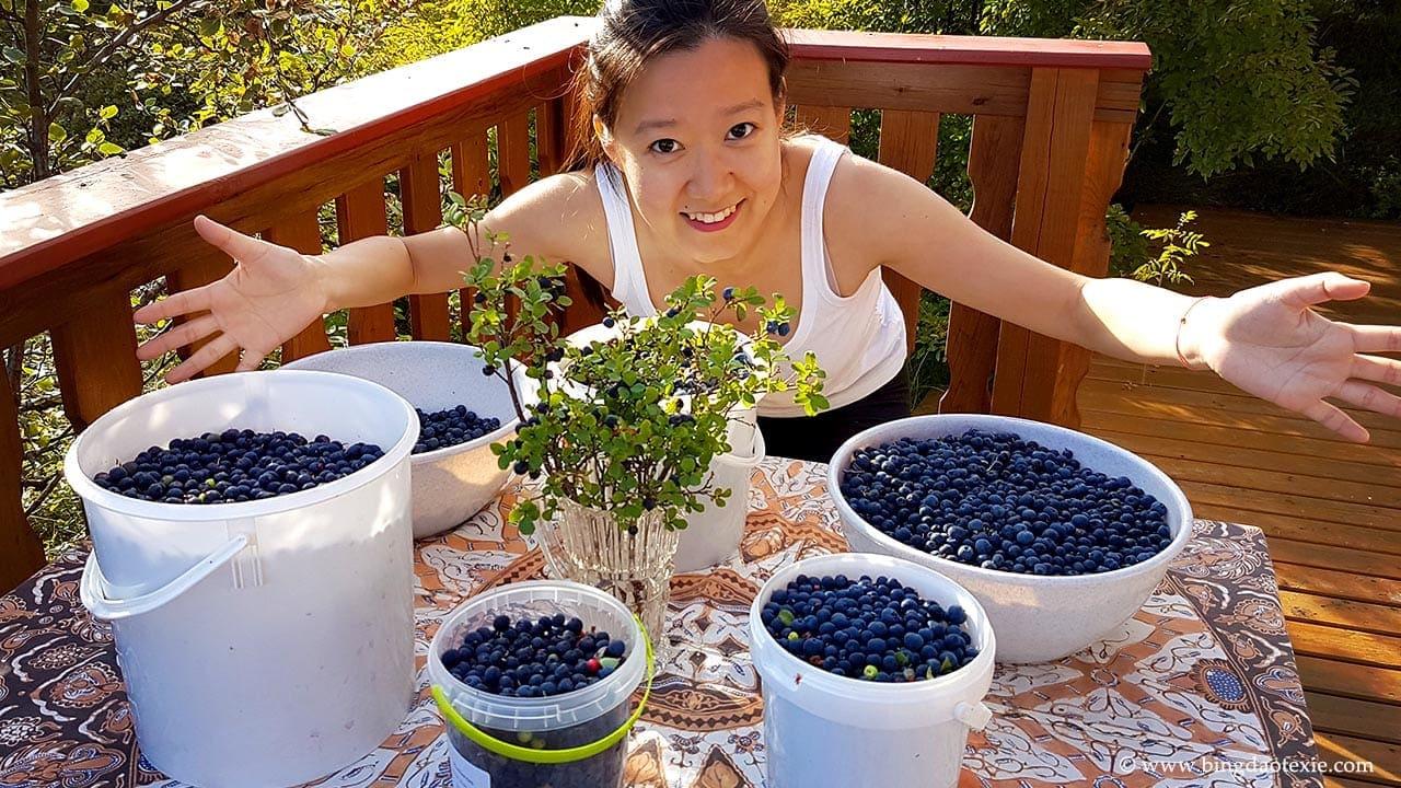 bingdaotexie 采摘冰岛野生蓝莓